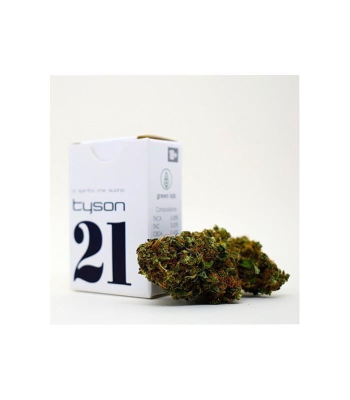 Infiorescenza Cannabis Sativa Green Lab 21 Tyson   scatolina 1 gr