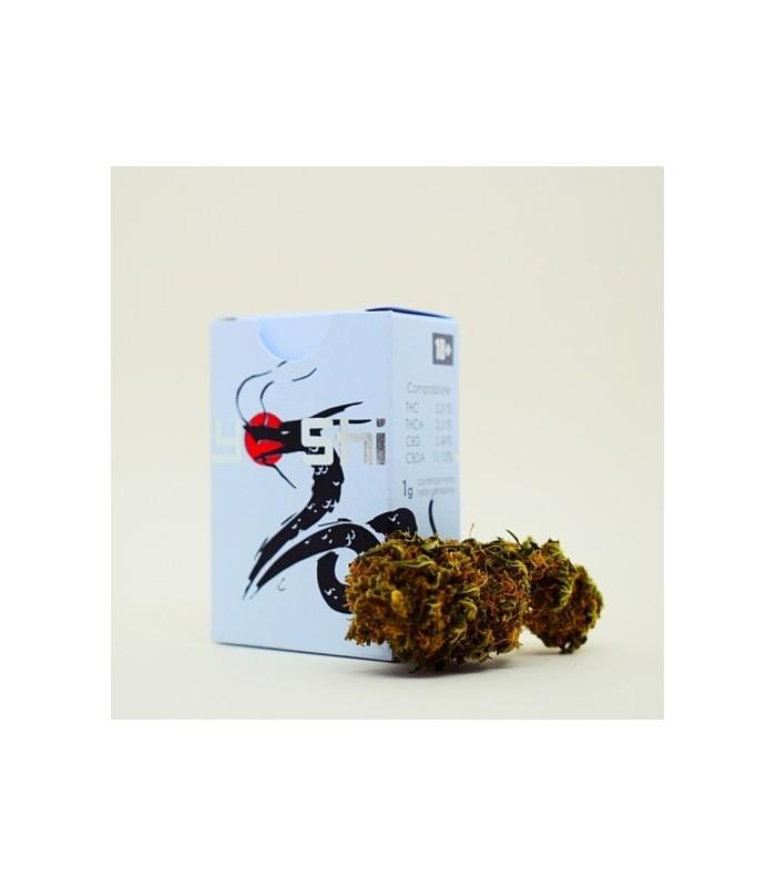 Infiorescenza Cannabis Sativa Green Lab Yoshi  scatolina 1 gr