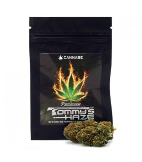 Infiorescenze Femminili di Cannabis Sativa Tommy's Haze Bustina da 1 gr