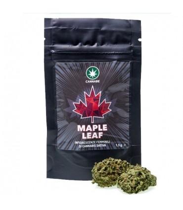 Infiorescenze Femminili di Cannabis Sativa Cannabe Maple Leaf 1 g senza semi
