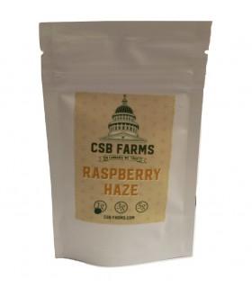 Infiorescenza di Canapa Raspberry bustina  1 g senza semi