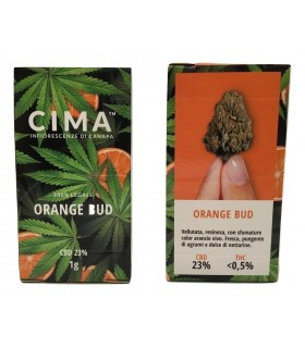 Infiorescenza di Cannabis Light Cima Orange Bud m scatolina da 1 gr