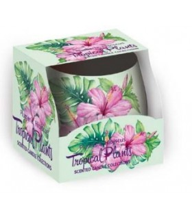 Candela Profumata Santo Candles in Vetro Fragranza Tropicale 100g