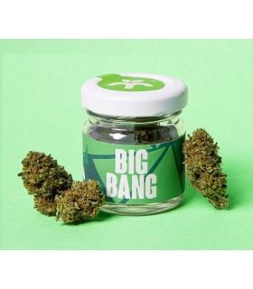 Infiorescenza di Cannabis Light BIG BANG CBD 16% barattoli in Vetro da 1gr.