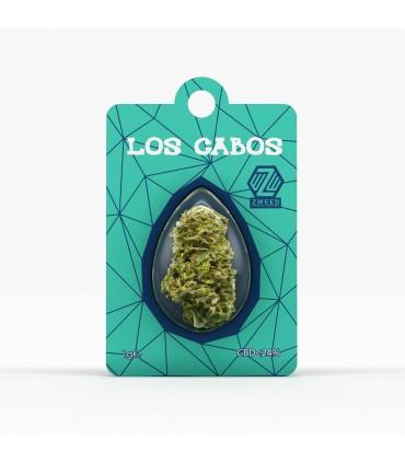 Infiorescenza di Cannabis Light ZWEED POD WORLD CBD 24% bustina da 1gr Espositore da 48 pz. assortito con 6 Verietà