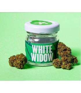 Infiorescenza di Cannabis Light WHITE WIDOW CBD 18% Barattolo in Vetro da 1gr.